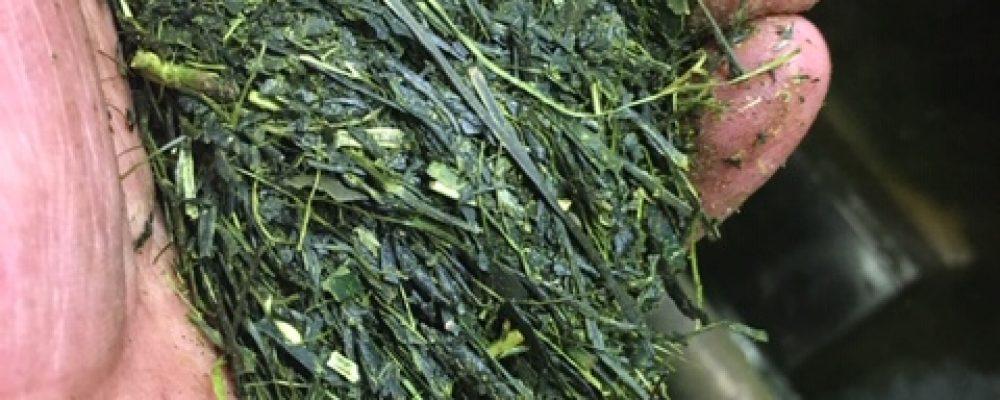 令和元年度二番茶製造がはじまりました。